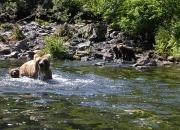 alaska-wildlife-5
