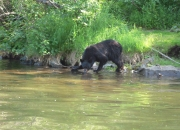 alaska-wildlife-6