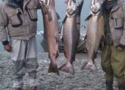 alaska-king-salmon-16