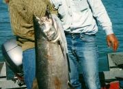 alaska-king-salmon-25