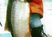 alaska-king-salmon-26