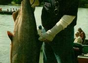 alaska-king-salmon-35